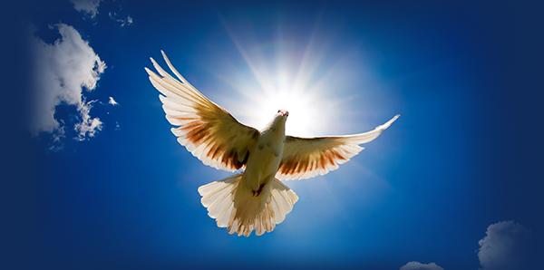 Golub_Duh Sveti